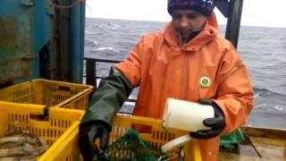 Работа в Норвегии на живом крабе