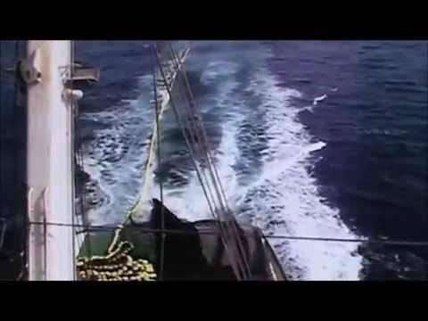 Tuna Purse Seine Fishing  (Quick Summary)