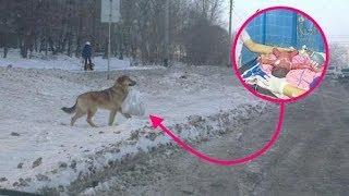 Собака принесла домой найденный на свалке пакет и этим спасла младенца