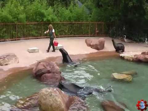 zoo de mulhouse le repas des animaux 21 juin 2009 youtube. Black Bedroom Furniture Sets. Home Design Ideas