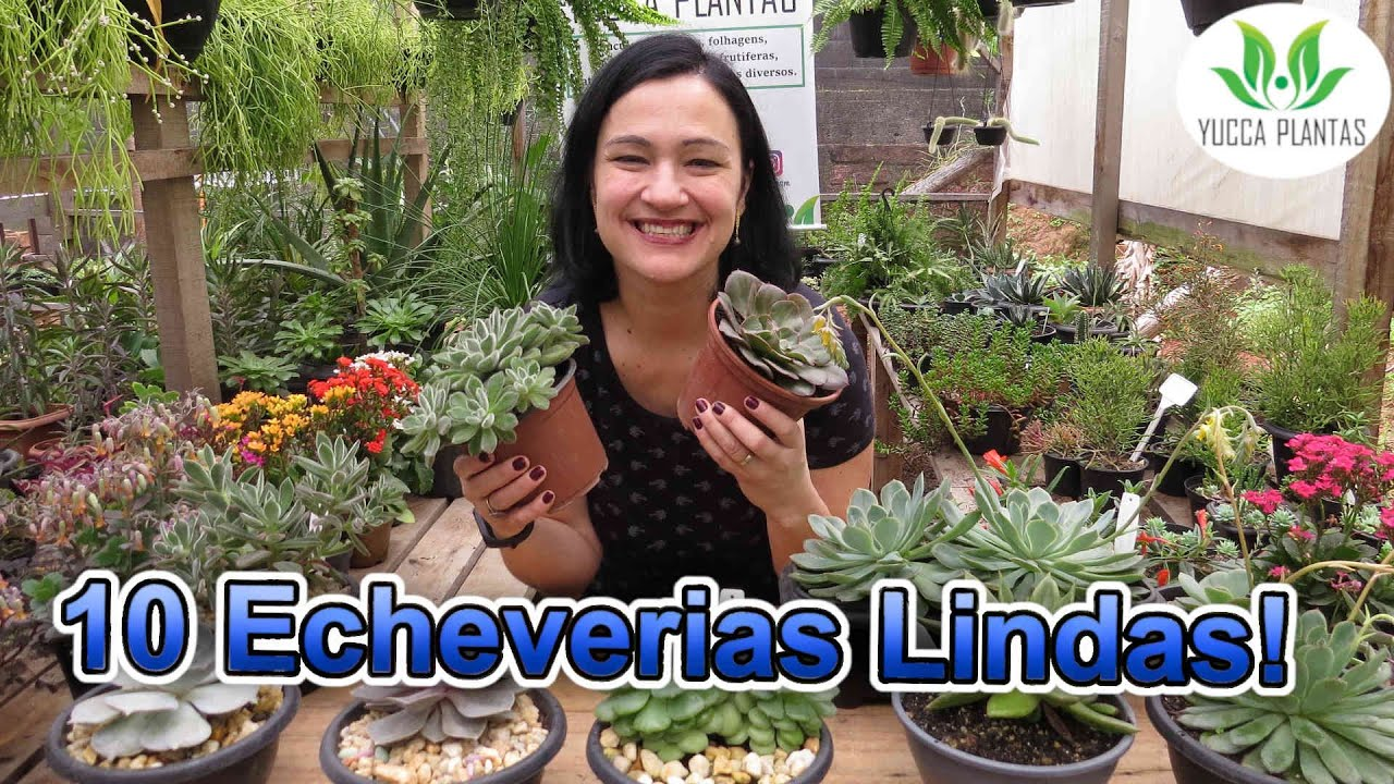 10 Echeverias MARAVILHOSAS!