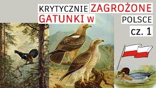 Zwierzęta, skrajnie zagrożone w Polsce. Część 1
