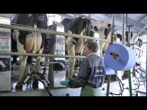 Carousel milking GEA Westfalia 60 stands AutoRotor