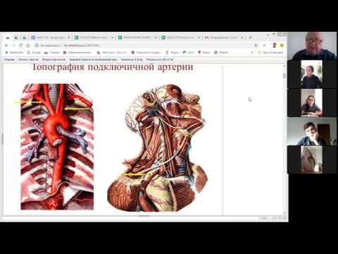 Артерии и вены верхних конечностей