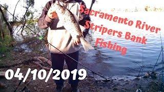 South River Stripers Bank Fishing (04102019) Sacramento River