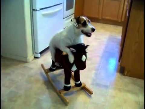 Este perro hace de todo! simplemente Genial! | OcioFX