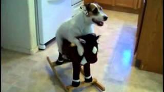 Este perro hace de todo! simplemente Genial! | OcioFX thumbnail