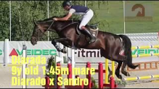 ***SOLD*** Diarada, 9y old 1.45m jumper Diarado x Sandro