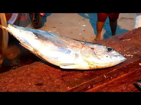TUNA FISH CUTTING