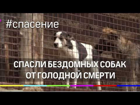 Администрация Чехова и волонтеры спасли бездомных собак от голодной смерти в приюте
