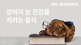 강아지 눈 건강을 지키는 음식에는 뭐가 있을까요? | …