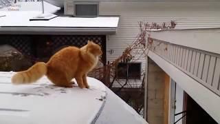 【爆笑】ジャンプに失敗する猫たち【ネコ】 #猫 #子猫 ◇おすすめ◇ 【動...