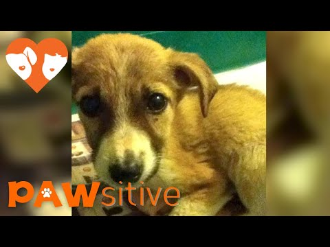 Family in Turkey Brings Home Dying Puppy To Pass in Peace But He Surprises Them All