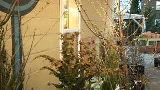 Tips for gardening as winter weather continues
