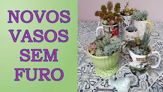 Aprenda a Plantar Suculentas em Vasos sem Furos