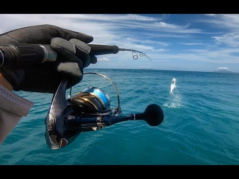 SPANISH MACKEREL BREAKS FAVOURITE ROD! GT WHILE LIVE AND QUEENIES BY THE TRUCKLOAD!