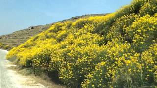 Serifos: the flowers