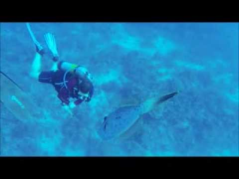 Cayman Island Divers Club Dive Jan 6th 2013