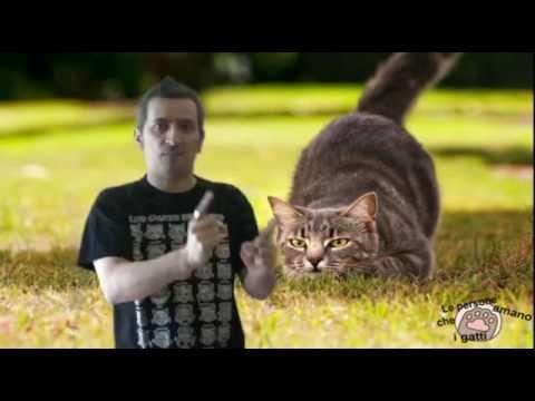 La coda del gatto youtube for La coda del gatto