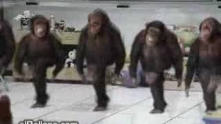 Riverdance Chimps