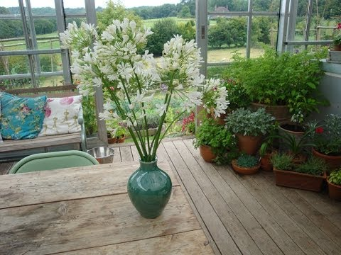 A Simple Arrangement Of Agapanthus In A Ceramic Vase Youtube