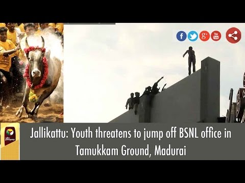 Jallikattu: Youth Threatens to Jump off BSNL Office in Tamukkam Ground, Madurai | VISUALS