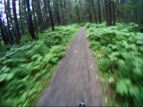 Mountain Bike Ride Through the Alaska Rain Forest