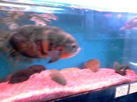 P&P Tropical Fish Store, Orange County, Cal.