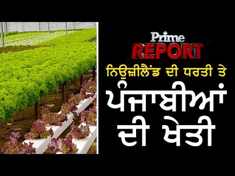 Prime Report #59_Successful Punjabi Farmers in New Zealand