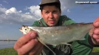 Рыбалка на Чехонь,