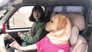 Dogs drive sports cars to pick up beautiful women, the violent engine is exciting!