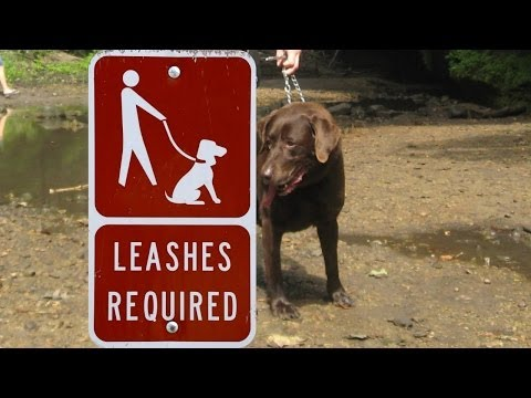 How To Stop A Dog From Chewing Leash | Walking a Dog | Puppy Obedience Training Videos