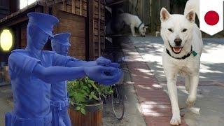 千葉県松戸市の住宅街で飼い主と通行人ら3人を襲った紀州犬に対し、警察...