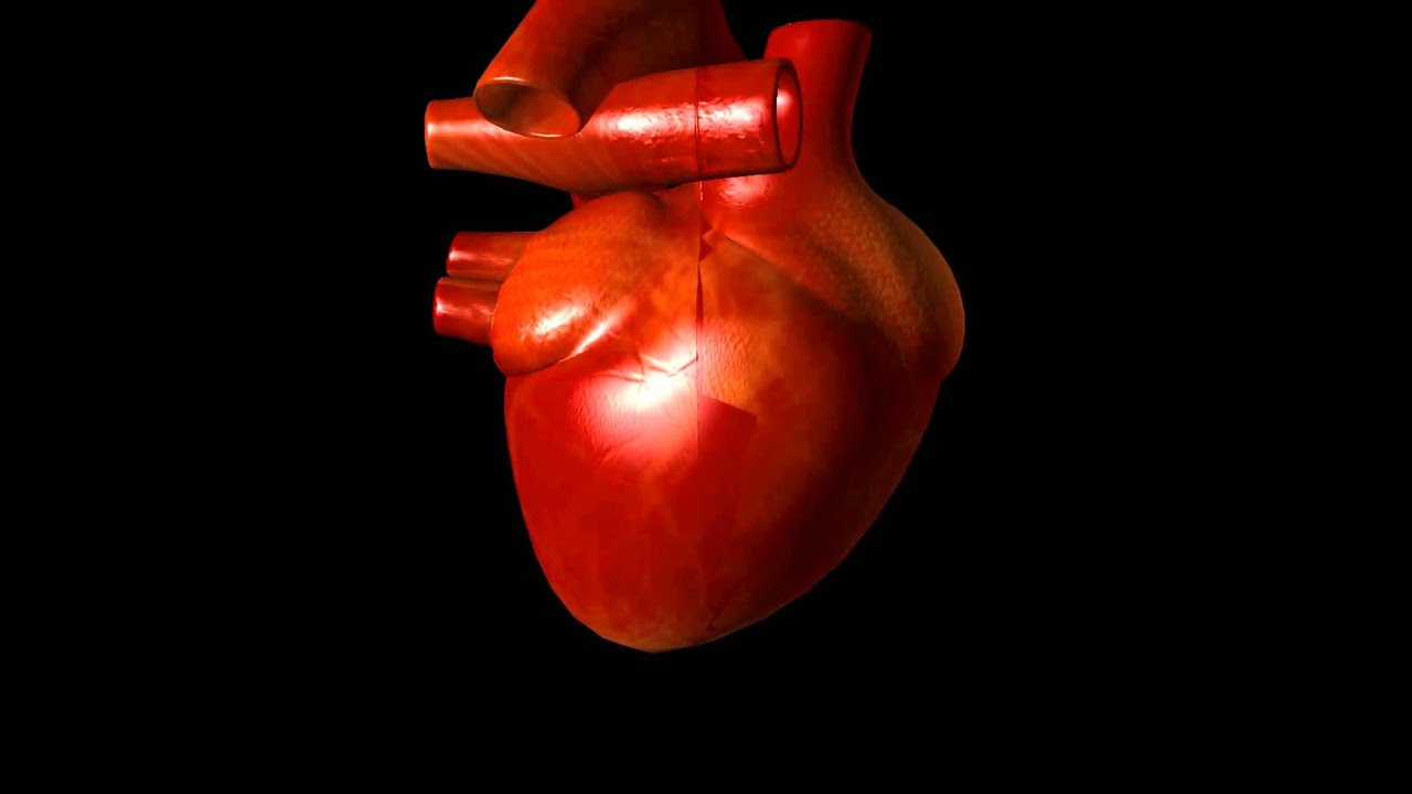Animated human heart - photo#48
