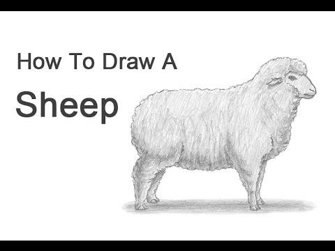 How To Draw A Sheep Youtube