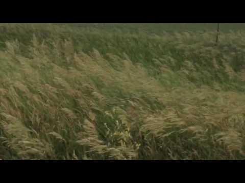 South Dakota fields