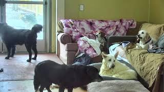 Senior Dog Gathering Room Cam 01-18-2018 05:46:56 - 06:46:57