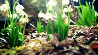 Time Lapse: Flowers Growing In Seconds FULL HD 1080p
