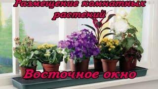 Размещение комнатных растений (Восточное окно)
