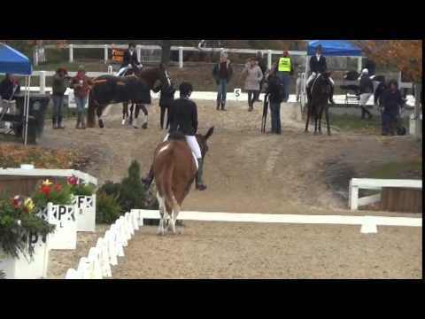 First Mule to Compete at US Dressage Finals - Heart B Dyna with Laura Hermanson