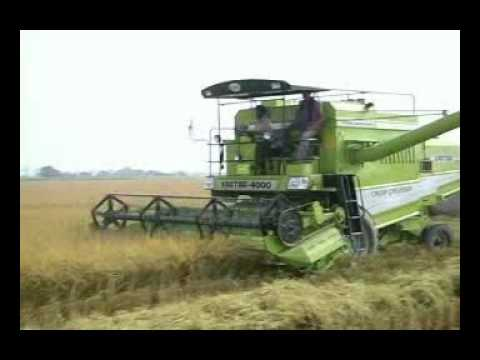 KARTAR COMBINE HARVESTERS::-Rice harvesting by India's Best Harvester....