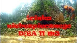 Praca w lesie 2017 (ścinka niebezpiecznego DĘBA 11 m3)