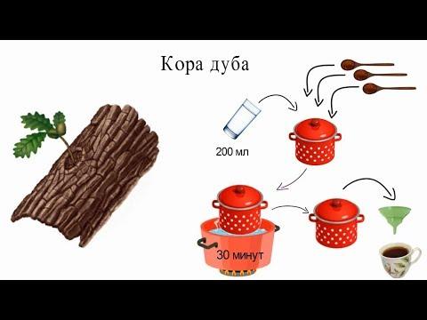 Как сделать отвар коры дуба