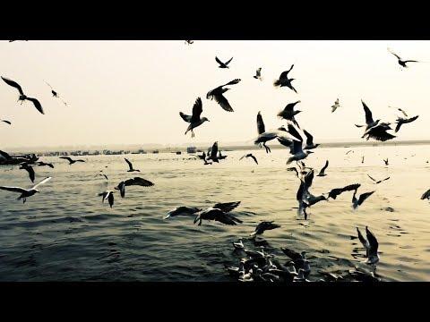 OHM - ADVAITA (Official Music Video)