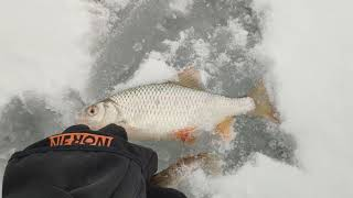 #Ока#рыбалка на вертолет#зимняя рыбалка#зимняя рыбалка на Оке