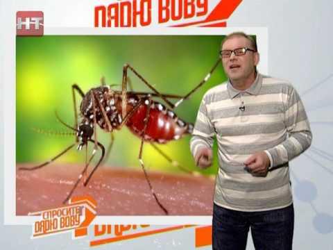 Вопрос: Какой продолжительности жизнь у комара(точнее, у комарихи)?