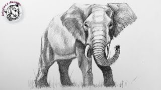 How to Draw an Elephant with Pencil Step by Step