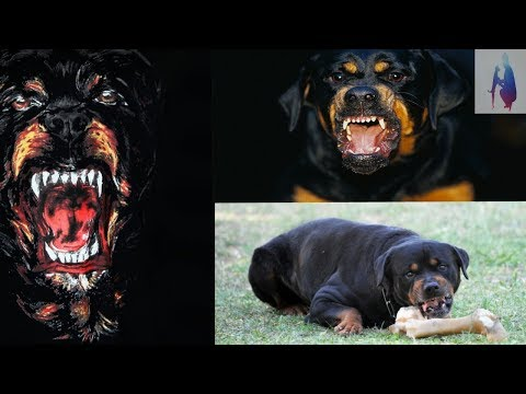 how to cheak pure rottweiler breed in hindi