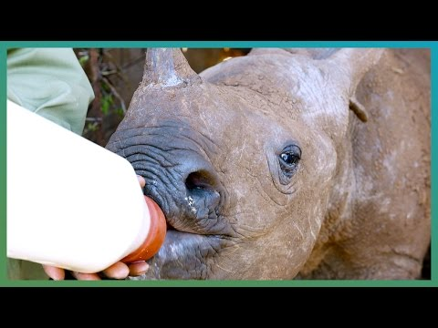 Instagram's Favourite Baby Rhino - Kenya Expedition - Earth Unplugged