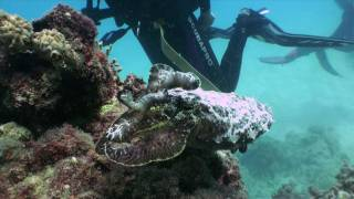 Great Barrier Reef Cuttlefish changing colour